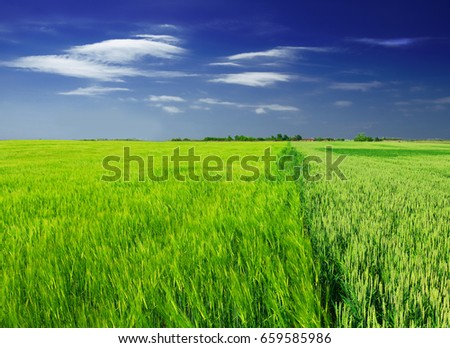 green wheat field and clouds #659585986