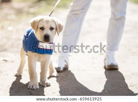 guide dog #659613925