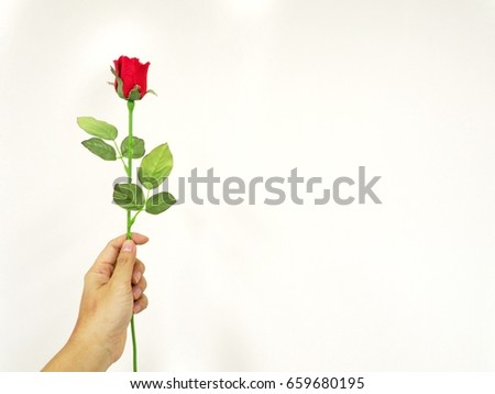 Hand holding rose isolated on white background #659680195