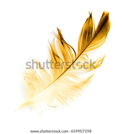 bird feather on white background #659907298