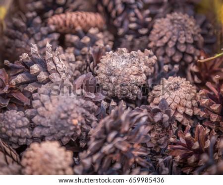 Fir cones close-up #659985436
