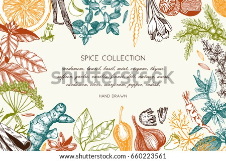 Vector card design with hand drawn spices and herbs. Decorative background with aromatic plants sketch. Vintage kitchen template. Food ingredients Royalty-Free Stock Photo #660223561