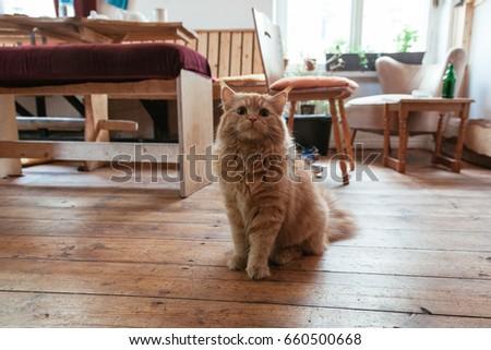 Cute domestic cat. #660500668