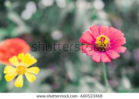 Cosmos flowers on green background #660523468