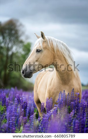 Vertical portrait of a beautiful Palomino horse. #660805789