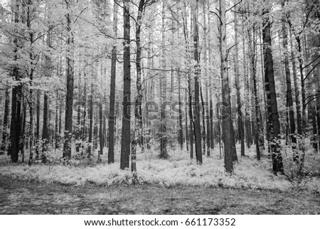 summer forest with harsh shadows and clouds. infrared image #661173352