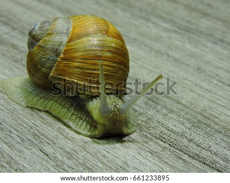 Snail crawling on the wooden surface. Copy space. Close up. #661233895