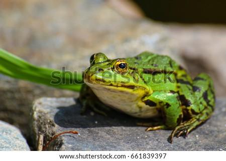 kiss the frog #661839397