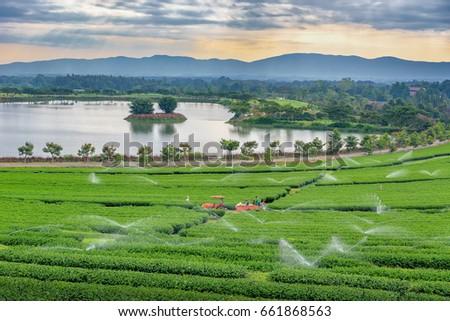 Tea plantation in Thailand # 1 #661868563