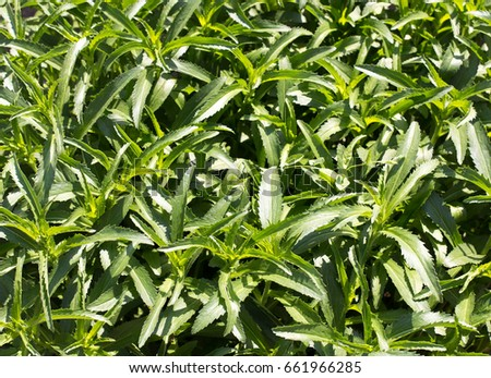 Green background, plants with green leaves #661966285