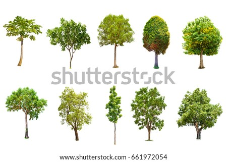 Isolated big tree on white background ,The collection of trees.Large trees database Botanical garden organization elements of Asian nature in Thailand, tropical trees isolated used for design, #661972054