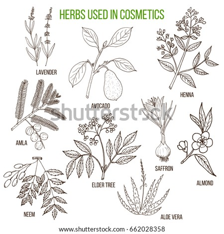 Herbs used in cosmetology. Hand drawn vector set of cosmetical plants #662028358