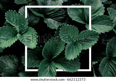 Deep green leaves, creative layout with white frame, flat lay. Nature concept #662112373