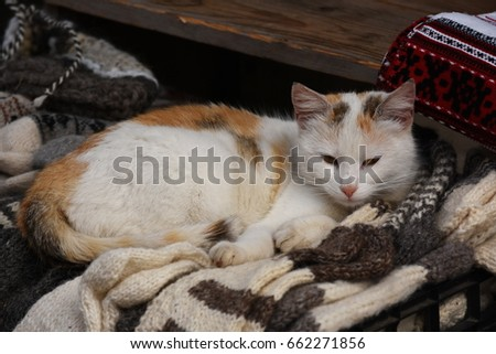 Striped cat relaxing on bed #662271856