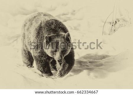 Brown Bear (Ursus arctos) in Lake Clark National Park, Alaska, USA #662334667