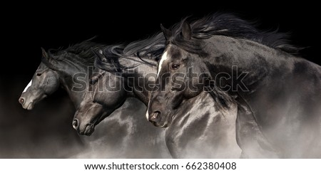 Black stallions with long mane run on dark background #662380408
