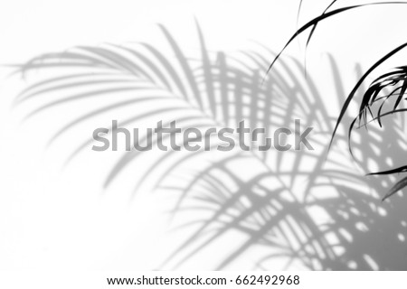 abstract background of shadows palm leaves on a white wall. White and Black #662492968