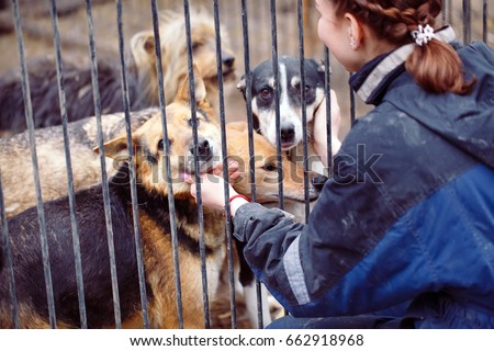 Girl volunteer in the nursery for dogs. Shelter for stray dogs. Royalty-Free Stock Photo #662918968