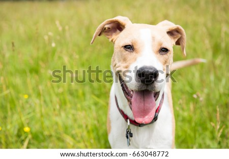 Young Dog in Off-Leash Dog Park with Big Smile #663048772
