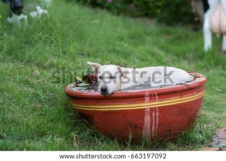 Dogs sleeping in a bath To loosen the heat #663197092