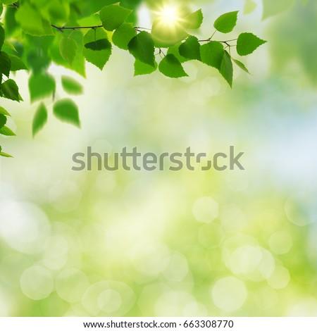 Summer garden, beauty seasonal backgrounds with beech tree and shiny bokeh #663308770