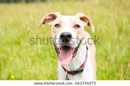 Young Dog in Off-Leash Dog Park with Big Smile #663336073