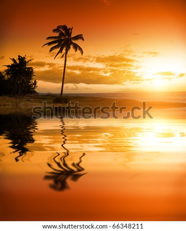 Palm tree at the ocean in Hawaii #66348211