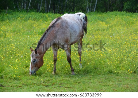 Young horse in field in spring season in Granby Quebec #663733999