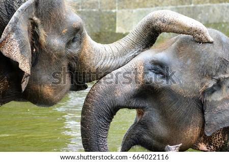 elephant indian Royalty-Free Stock Photo #664022116