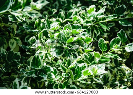 Green bush background #664129003