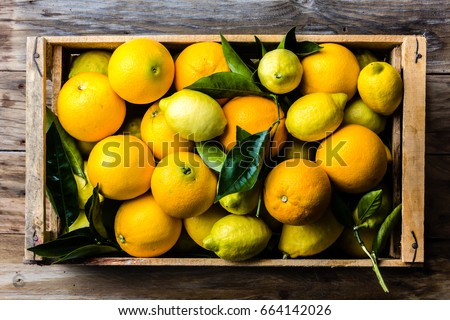 Citrus. Box of fresh citrus lemon and orange.with lemon and orange tree leaves. Harvest concept. Top view, #664142026