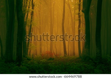 Smooth mist in the woods #664469788