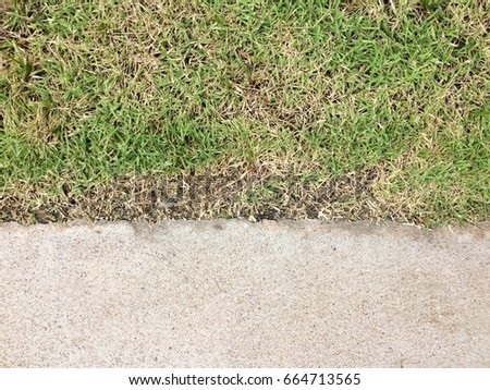 Texture background of grass and cement floor #664713565