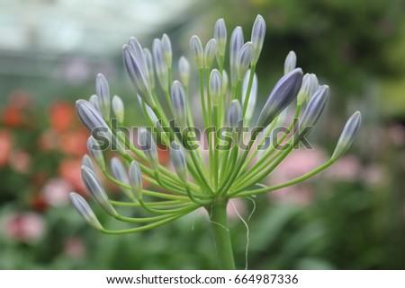 Winter flowers #664987336