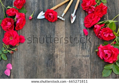 Florist vintage gardening set with red roses and tools on wooden table #665271811