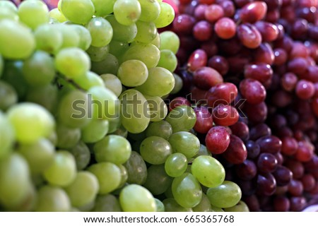 Healthy fruits Red wine grapes background/ dark grapes/ blue grapes/wine grapes,Red wine grapes background/dark grapes,blue grapes,Red Grape in a supermarket local market bunch of grapes ready to eat #665365768