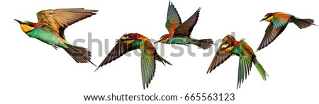 Set of exotic birds on white backgrounds,Bee-eater, creative approach #665563123
