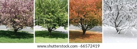 Four Seasons #66572419