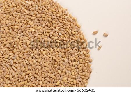 Barley #66602485