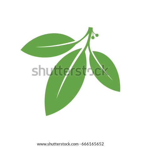 Bay leaf. Green leaves on white background Royalty-Free Stock Photo #666165652