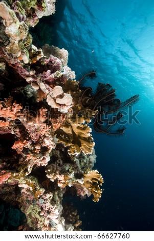 Fish. coral and ocean. #66627760
