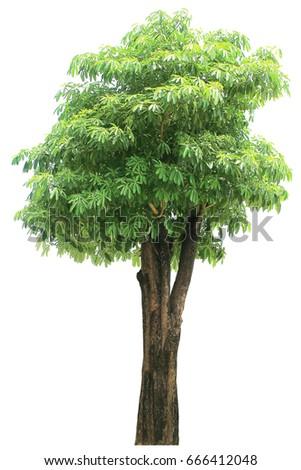 Isolated trees on white background #666412048