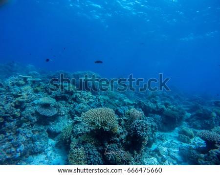 underwater #666475660