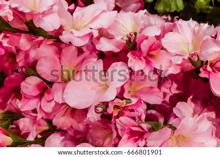 pink flowers close up #666801901