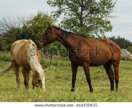a group of horses walking in a paddock against a background of green trees #666920635