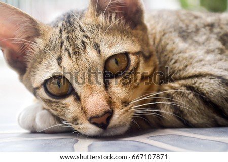 Brown kitten with his yellow eyes #667107871