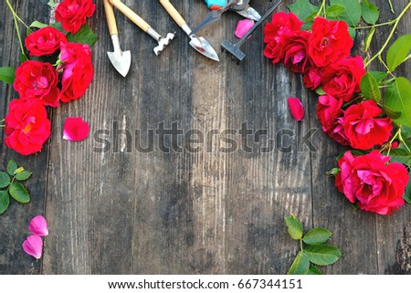 Florist vintage gardening set with red roses and tools on wooden table. Flat lay, frame #667344151