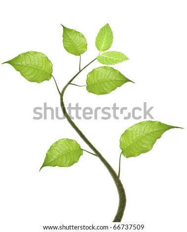 Green leaves on white background #66737509