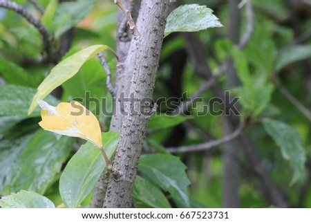 the yellow leaf among many green leaves on bush tree #667523731