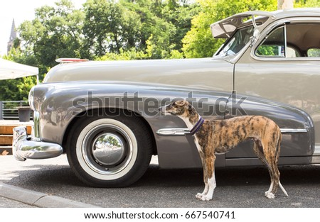 France Tartas june 2017: Oldsmobile from 1946 with greyhound #667540741